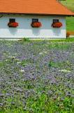 Fält av blommor Royaltyfri Fotografi