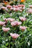 Fält av blommor Fotografering för Bildbyråer