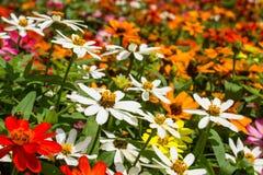 Fält av blommor Royaltyfri Foto