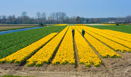 Fält av blommor Arkivfoto
