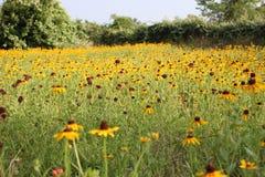 Fält av blommor Arkivbilder