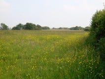 Fält av blommor, Ameiden, Nederländerna Fotografering för Bildbyråer