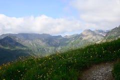 Fält av blommor i bergen Österrike Arkivbild