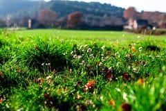 Fält av blommor i Provence, Frankrike Arkivfoton