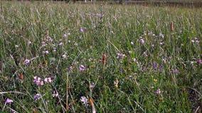 Fält av blommor, 4K, 50fps, HQ arkivfilmer