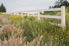 Fält av blommor med det vita staketet royaltyfri bild