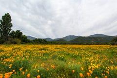 Fält av blommor och infödd vegetation Arkivfoto