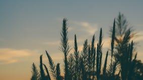 Fält av blommor på himmelbakgrund i afton arkivfoto