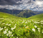Fält av blomningen blommar i de Kaukasus bergen Royaltyfri Fotografi