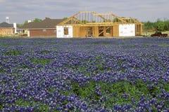 Fält av bluebonnets i blomvåren Willow City Loop Rd TX arkivfoton