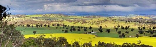 Fält av canola- och jordbruksmarkpanorama Royaltyfri Foto
