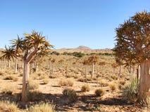 Fält av darrningträd Arkivbild