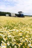 Fält av den färgrika tusenskönan med ut ur fokuslantgårdtraktoren i bakgrunden Arkivfoton