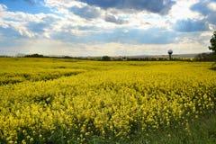 Fält av den gula blomningrapsen på en molnig blå himmel i vår (Brassicanapus), blommande canola Arkivbilder