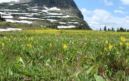 Fält av den gula tungan Fawn Lilies för lamm` s Royaltyfria Foton