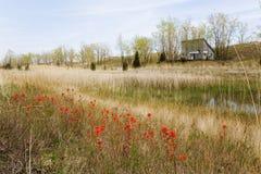 Fält av den lösa indiska målarpenseln, lång punkt, Kanada Arkivbilder