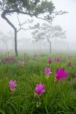 Fält av den wild blomman Fotografering för Bildbyråer
