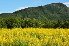 Fält av det gula siktsberget Arkivbild