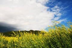 Fält av det gula siktsberget Fotografering för Bildbyråer