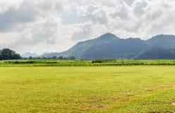 Fält av det vårgräs och berget fotografering för bildbyråer
