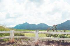 Fält av det vårgräs och berget royaltyfria foton