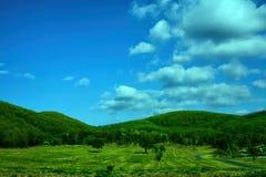 Fält av det vårgräs och berget Arkivbild