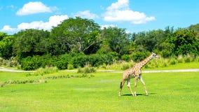 Fält av enkla djur royaltyfri foto