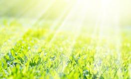 Fält av ett gräs i solsken, bakgrund Royaltyfria Bilder
