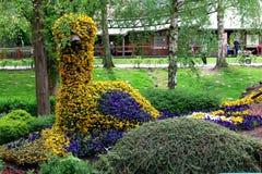 Fält av färgrika Pansy Flowers i vår!!! Fotografering för Bildbyråer