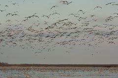 Fält av fåglar Arkivfoton