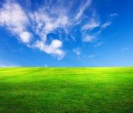 Fält av gräs arkivfoto