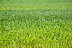 Fält av gräs Royaltyfri Fotografi