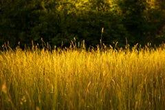 Fält av gräs Arkivbilder