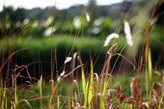 Fält av gräs Arkivfoton