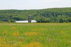 Fält av gräs och blommor och lantgårdstrukturen Royaltyfria Foton