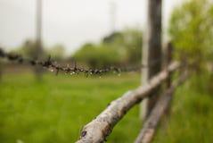 Fält av gräs och staketet i by Arkivbild