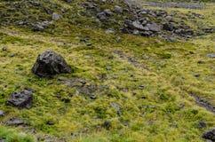 Fält av gräs och svarta rocks Fotografering för Bildbyråer