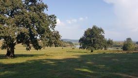 Fält av gräs och träd på kullen Royaltyfria Foton
