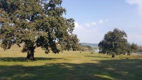 Fält av gräs och träd på kullen Royaltyfri Fotografi