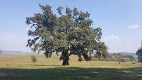 Fält av gräs och trädet på kullen Royaltyfria Foton