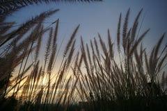 Fält av gräs under solnedgång Arkivbilder