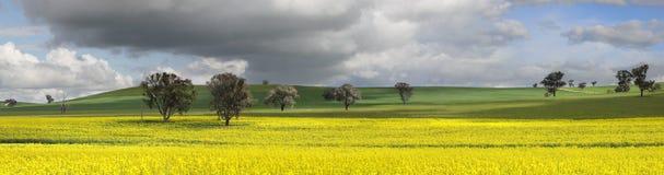 Fält av gräsplan och guld Royaltyfria Foton