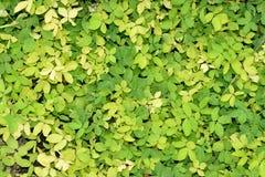 Fält av gräsplan- och gulingväxter Royaltyfri Fotografi