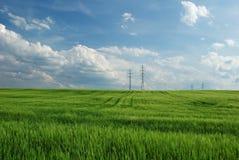 Fält av grön havre, på horisontelektricitetspylonerna Royaltyfria Bilder