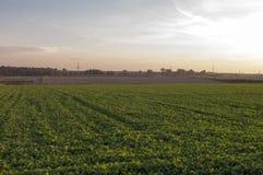 Fält av grönsallat Fotografering för Bildbyråer