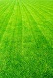 Fält av grönt gräs i sommaren, Arkivbild