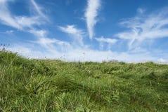Fält av green Arkivfoto