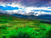Fält av green Arkivbilder