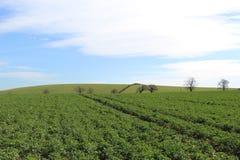 Fält av green royaltyfri bild
