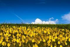 Fält av gula flaggor royaltyfri foto